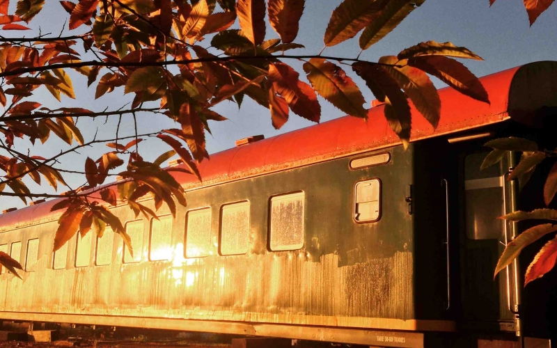 autumn chestnut and carriage